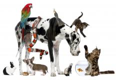 What is an Animal Psychologist?