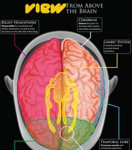 brain-emotions